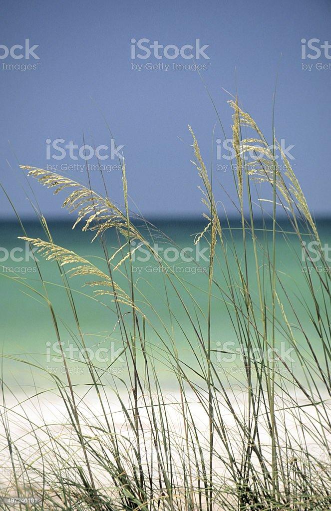 Tropical Beach-Florida stock photo