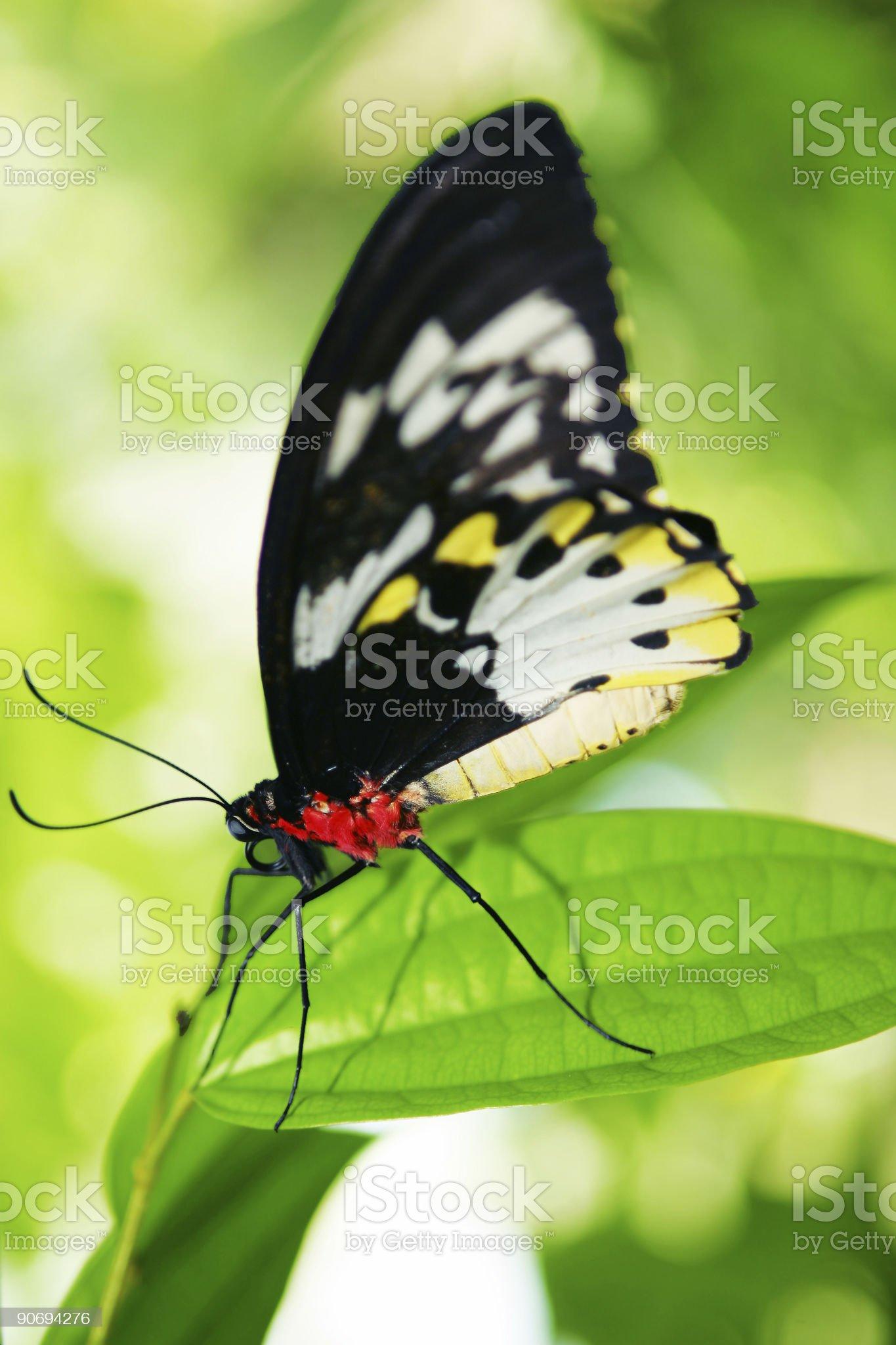 Tropical Beauty royalty-free stock photo