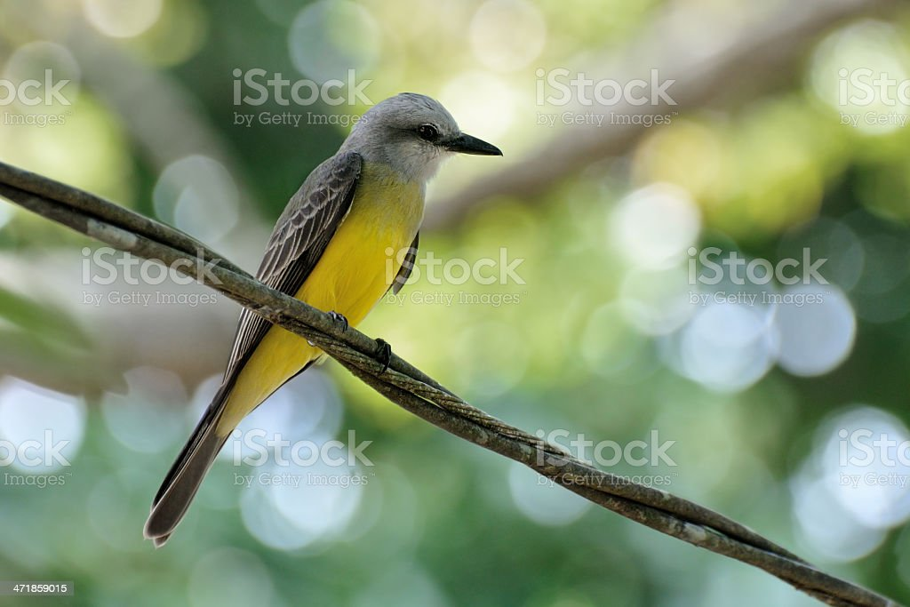 Tropical bird royalty-free stock photo