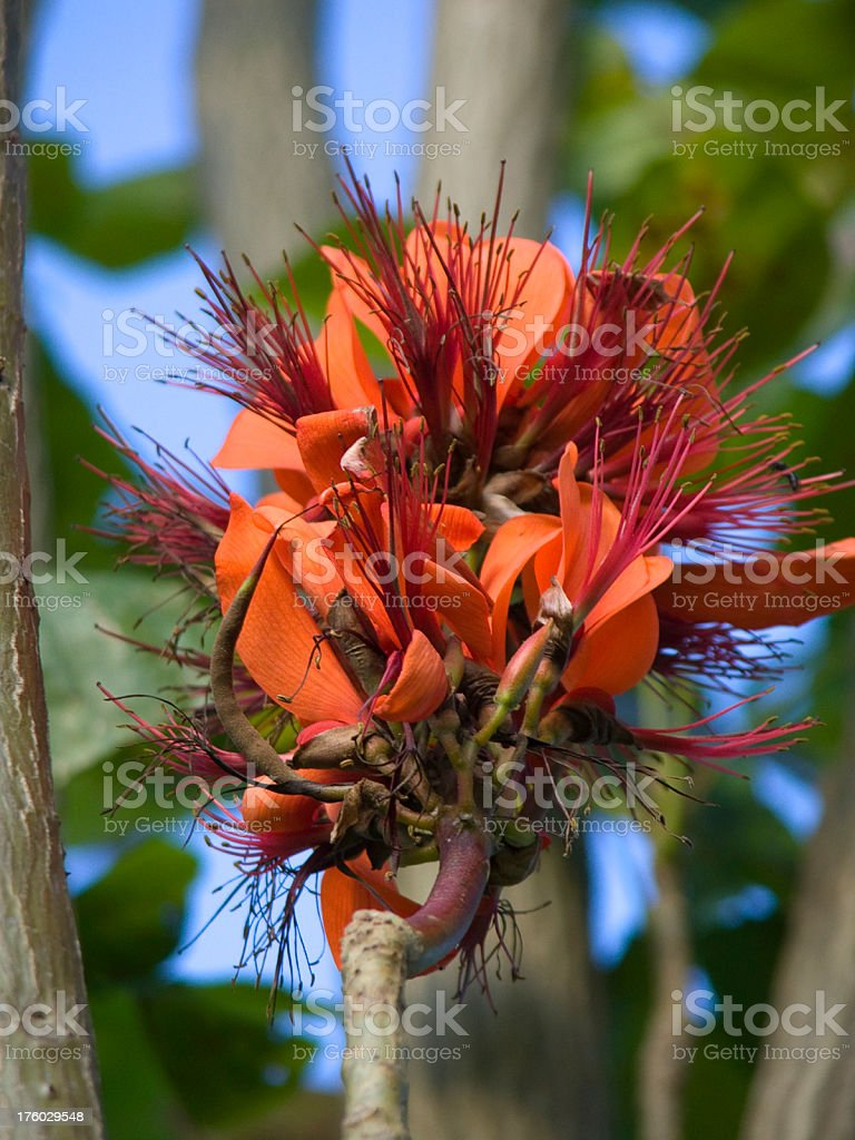 Tropical Bloom royalty-free stock photo