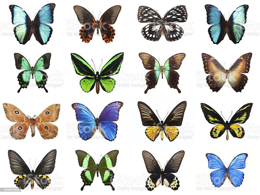 Tropical butterflies stock photo