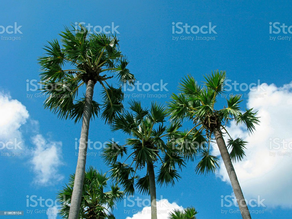 Tropical climate stock photo