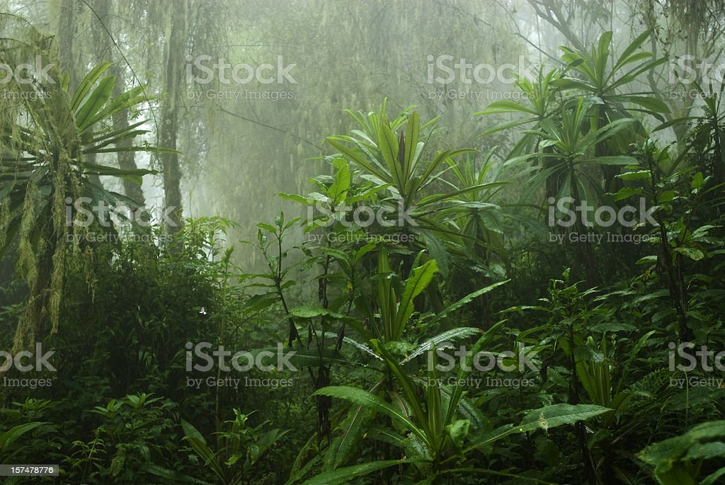 Tropical cloud forest in Central Africa stock photo