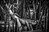 tropical coastal mangrove forest