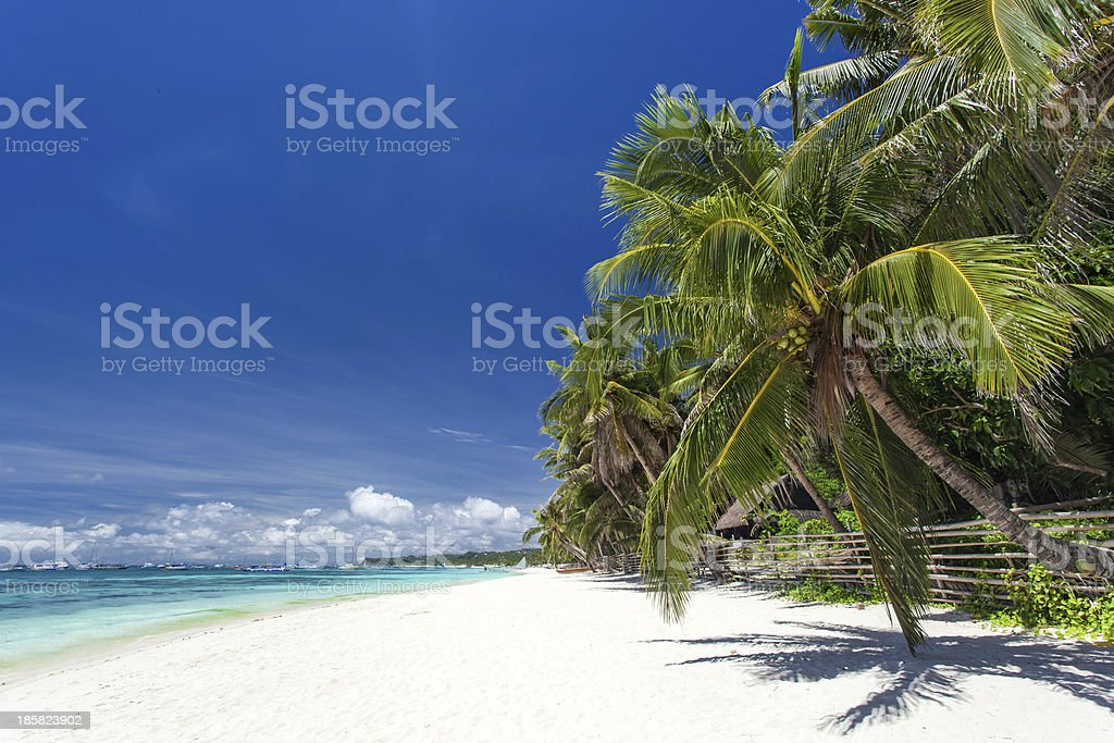 Tropical coastline with beautiful palm and white sand royalty-free stock photo