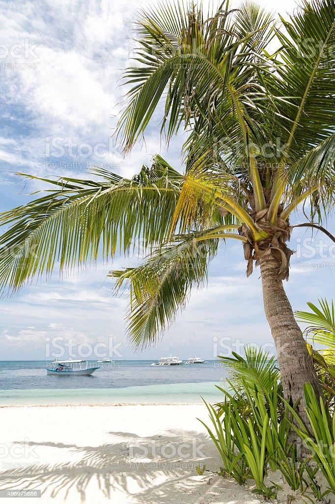 Tropischer Kokosnuss Baum Lizenzfreies stock-foto