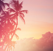 Tropical coconut trees at sunset