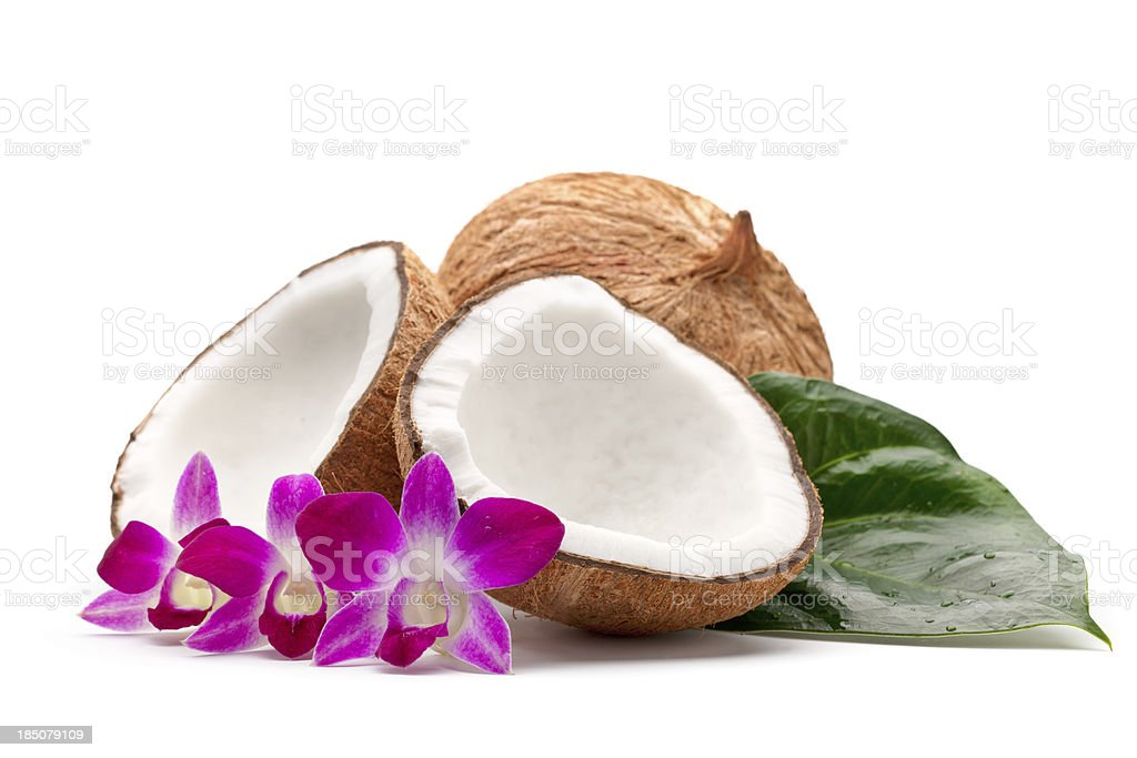 Tropical composition stock photo