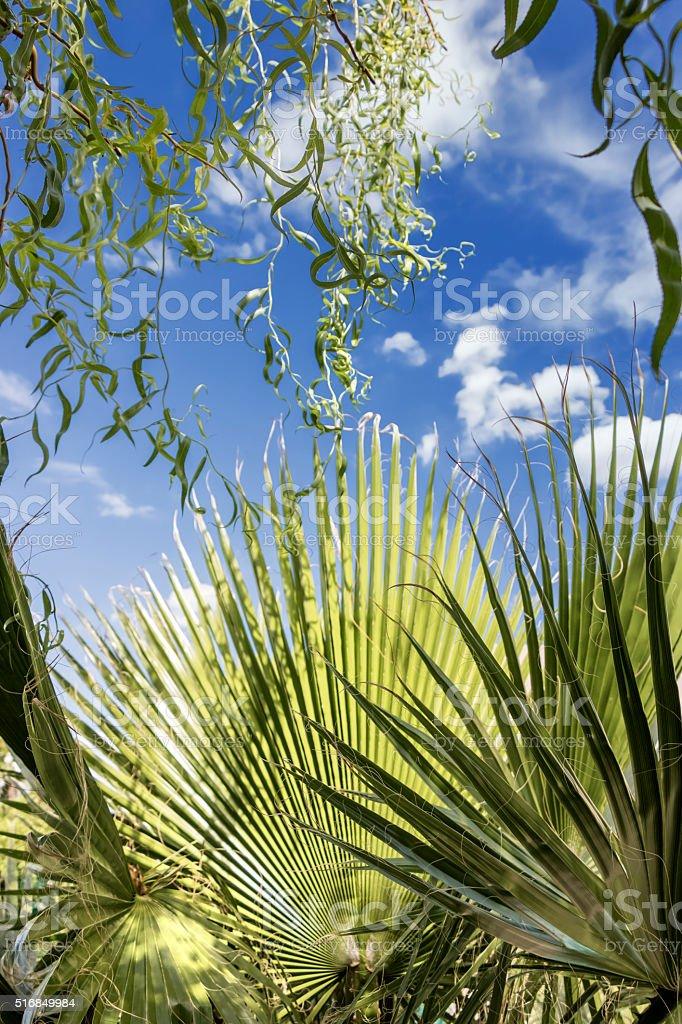 Tropical concept stock photo