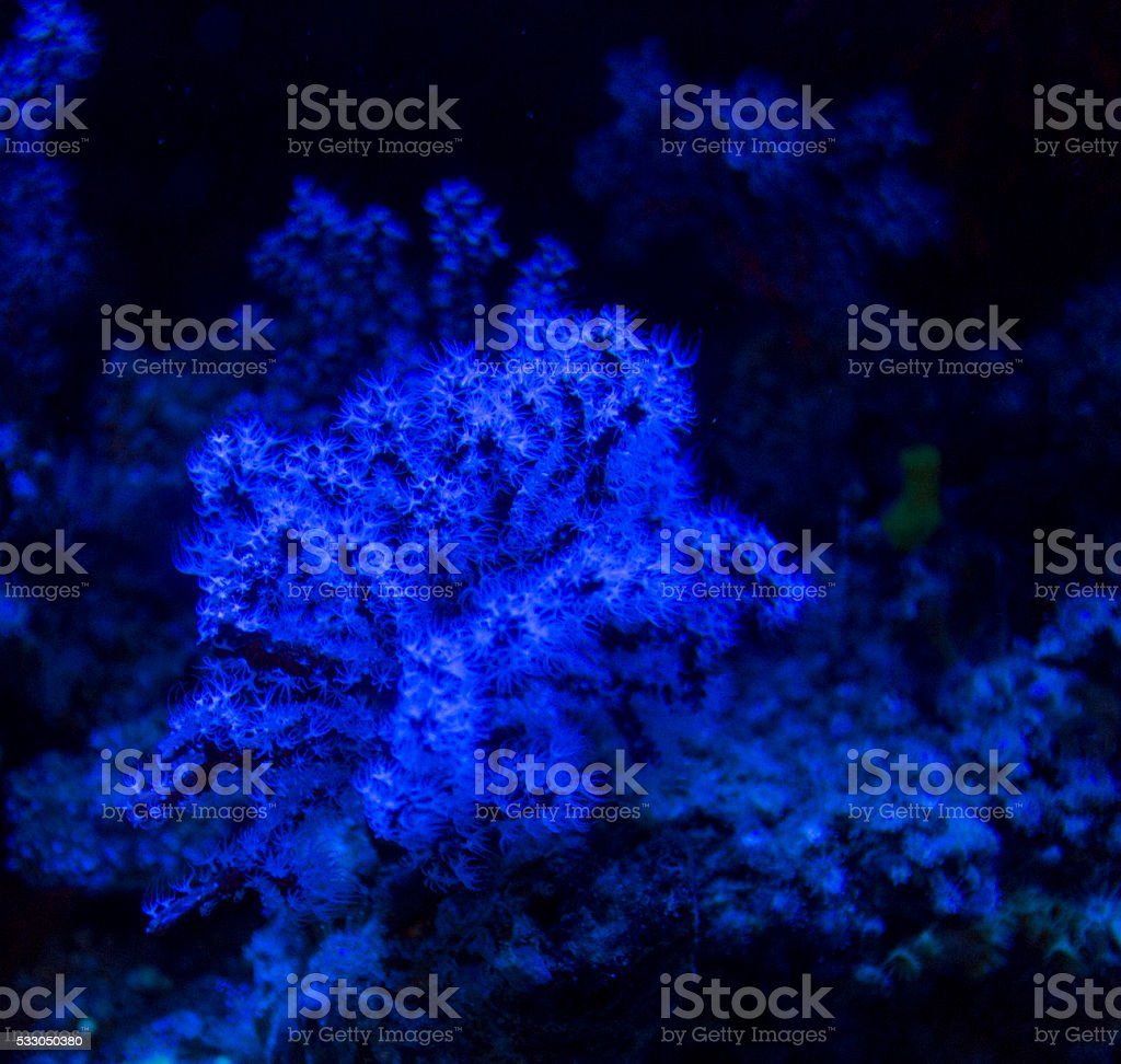 tropical coral stock photo