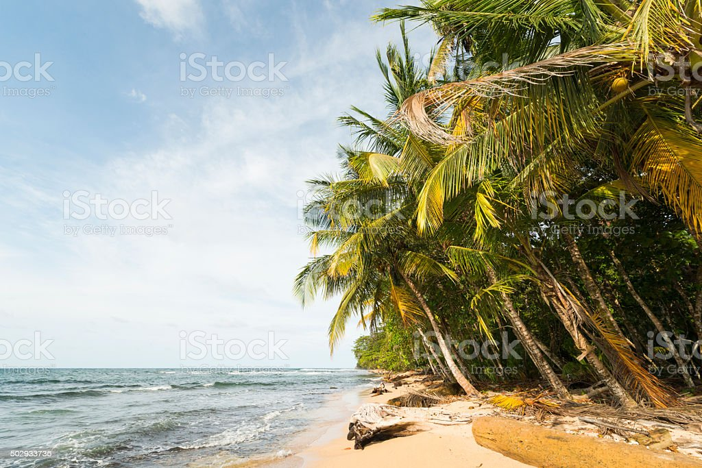Tropical Costa Rica Caribbean Coast Palm Trees and Beach stock photo