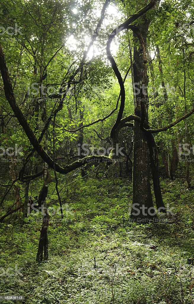 Tropical deep forest royalty-free stock photo
