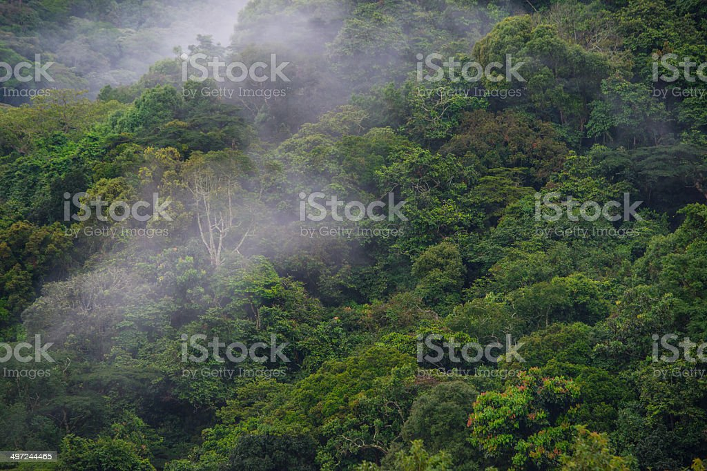 tropical dense cloud forest coverd in fog, Central Africa stock photo