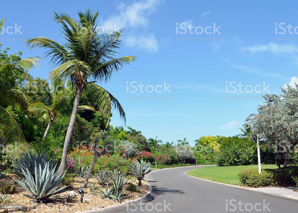 Tropical Driveway stock photo