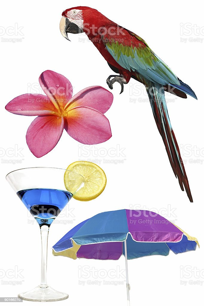 Tropical Elements royalty-free stock photo