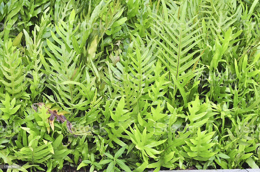 Tropical fern royalty-free stock photo
