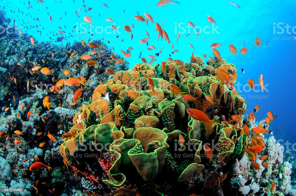 Tropical Fish and colorful Coral Reef stock photo