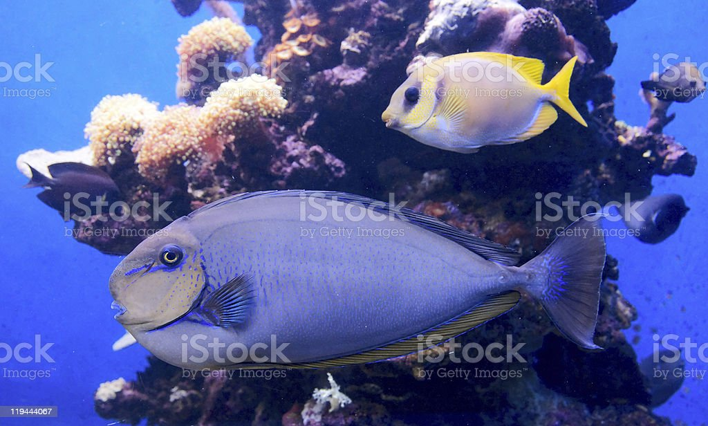 Tropical fish and corals stock photo