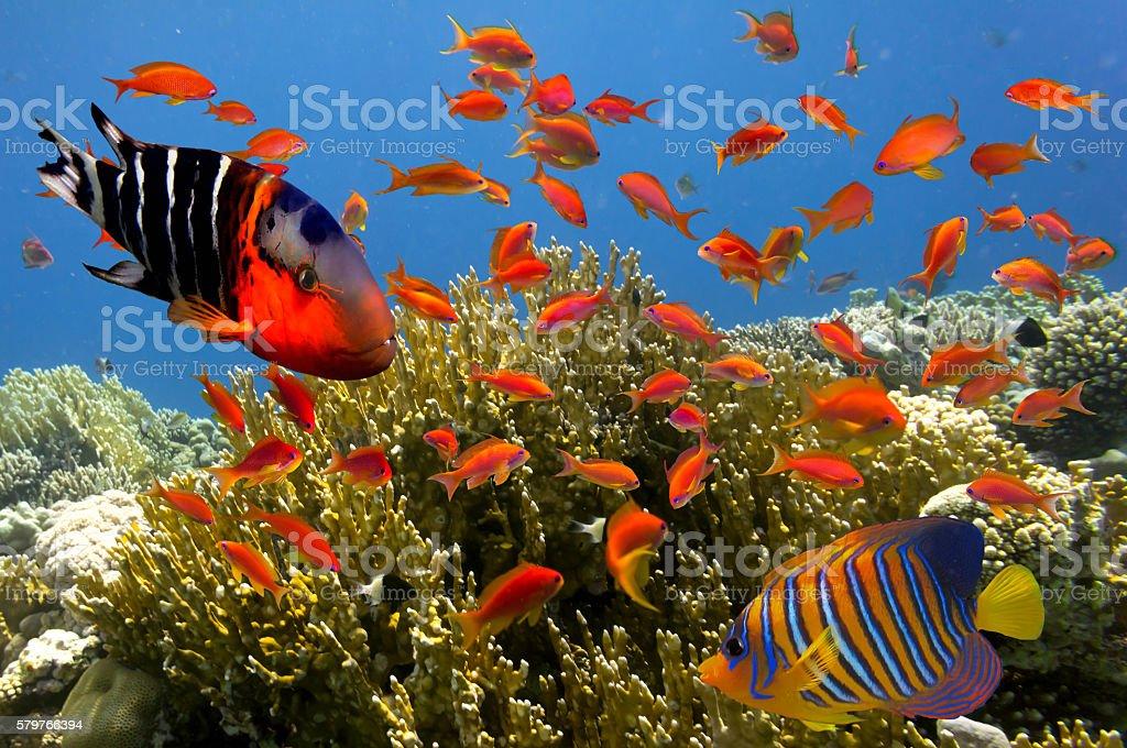 Tropical fish and Hard corals in Marine Aquarium stock photo