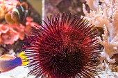 tropical fish and sea life in an aquarium