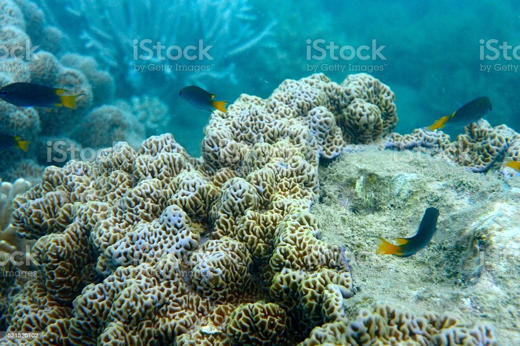 Tropical fish and textured coral stock photo