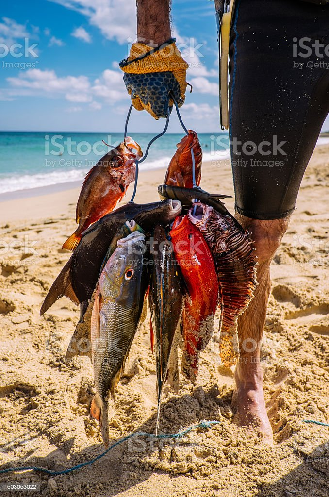 Tropical fish catch stock photo