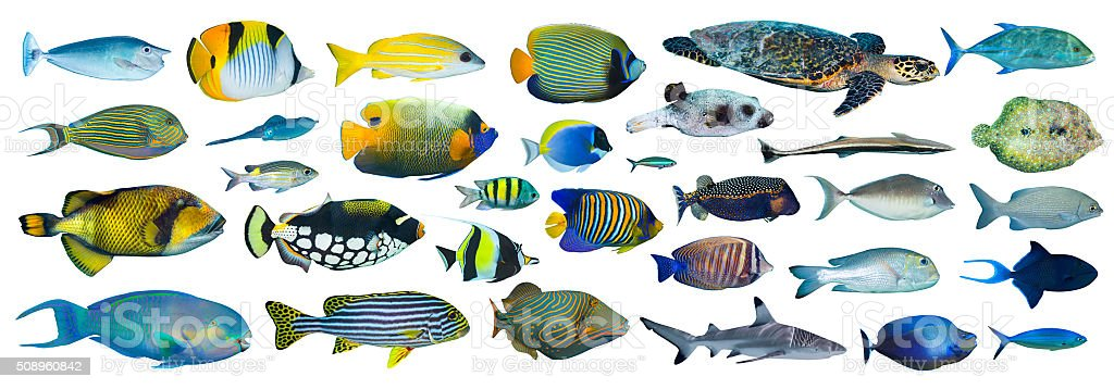 tropical fish collection stock photo