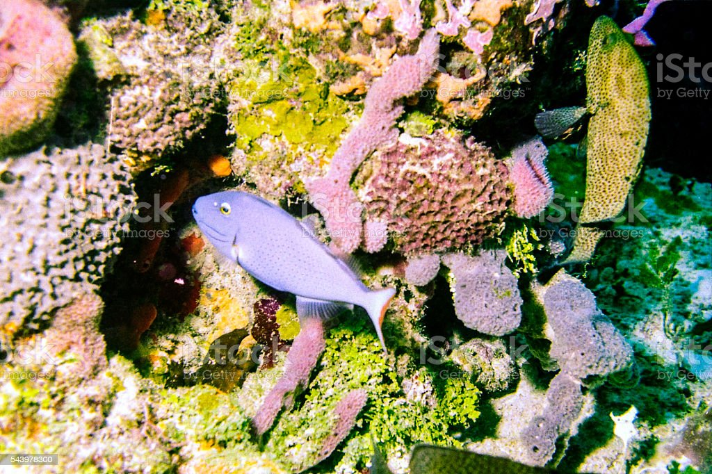 Tropical fish in coral reef stock photo