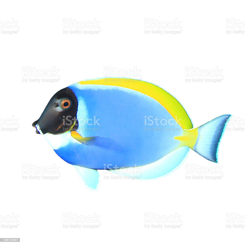 Tropical fish isolated stock photo