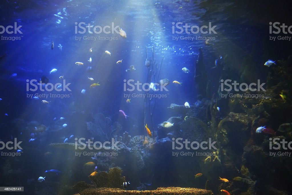 Tropical fish near coral reef stock photo