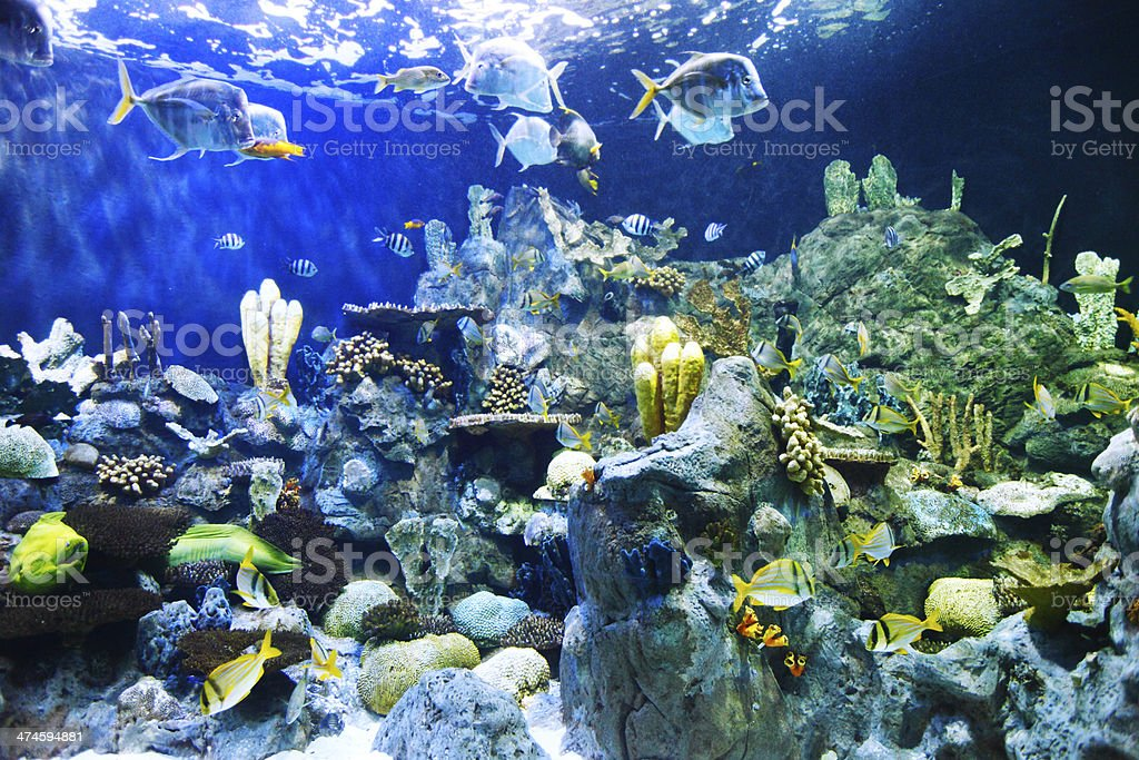 Tropical fish on a coral reef royalty-free stock photo