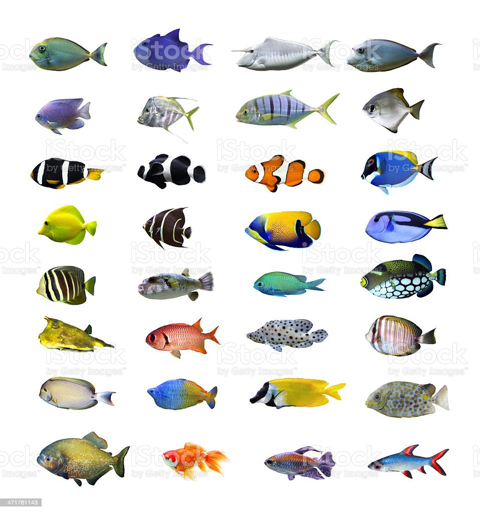 Tropical fish. stock photo