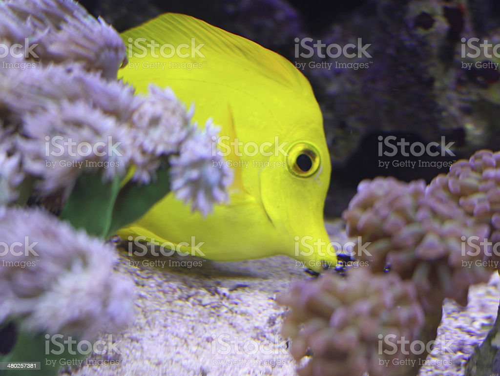 tropical fish that swims stock photo