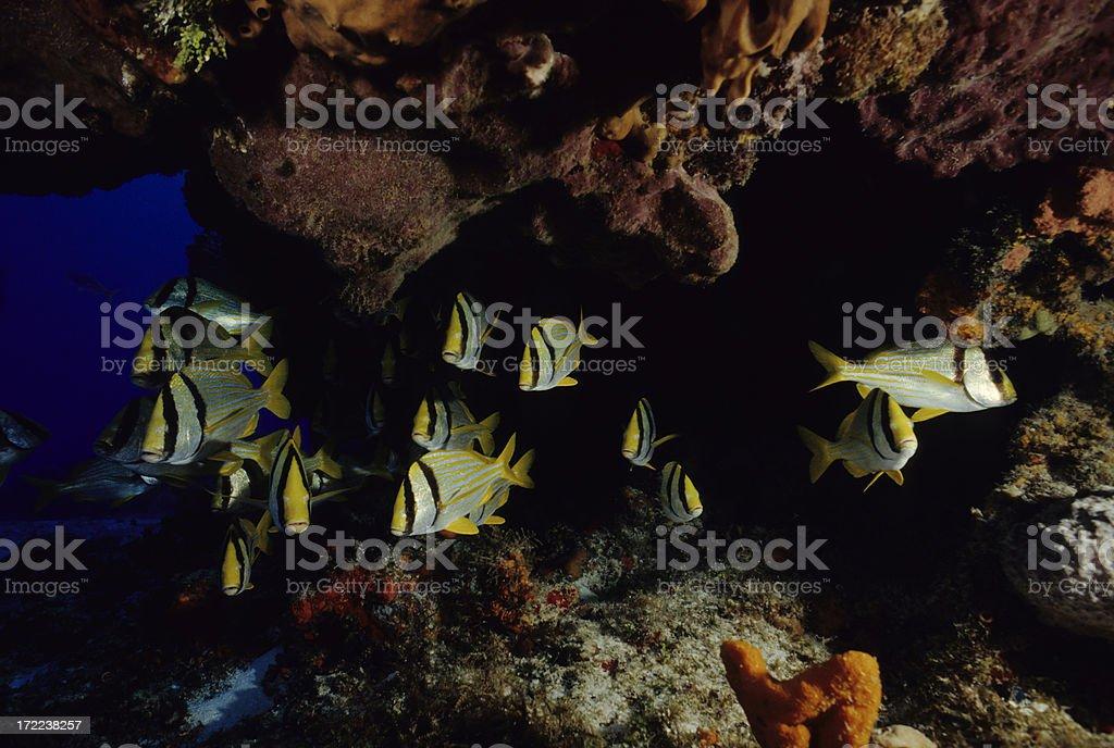 Tropical Fish Under Ledge stock photo