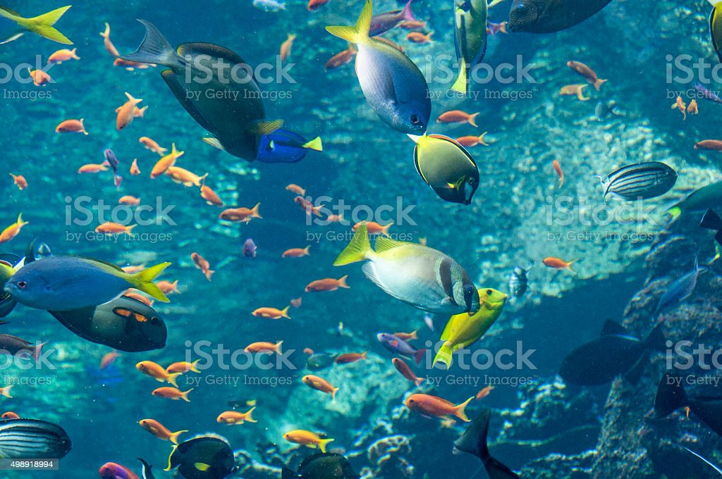 Tropical fish variety stock photo