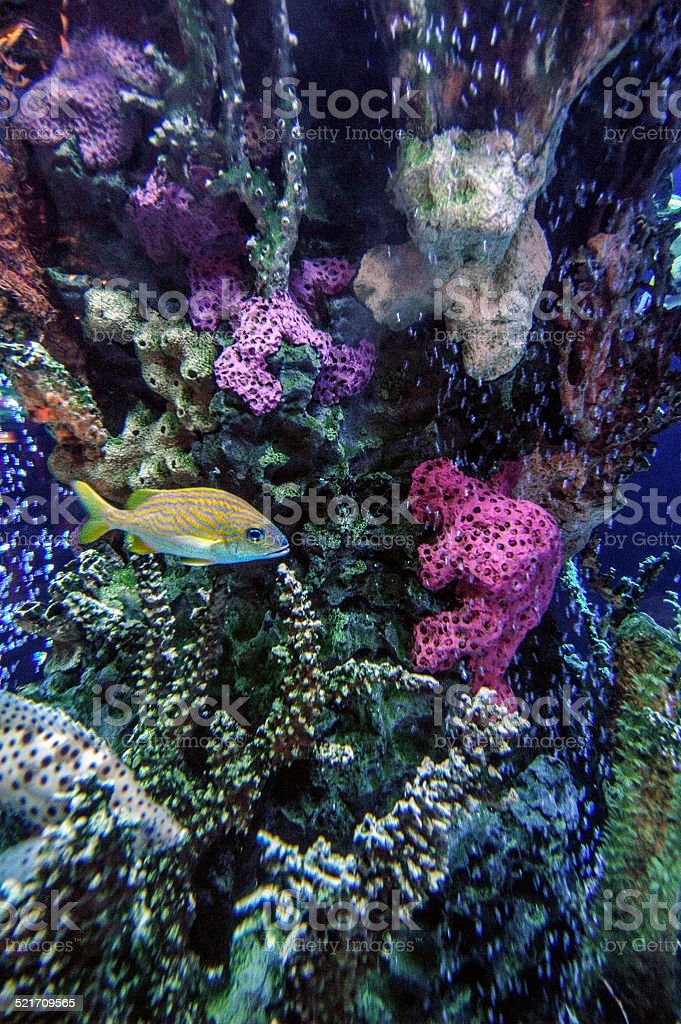 Tropical Fish Water stock photo