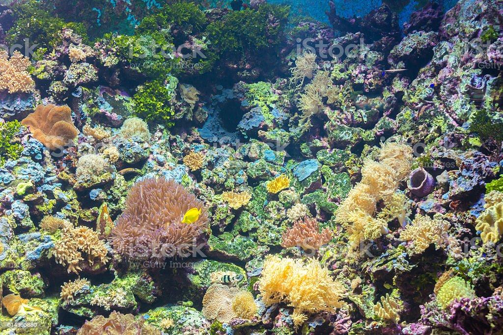 tropical fishes at Rayong aquarium, Thailand stock photo