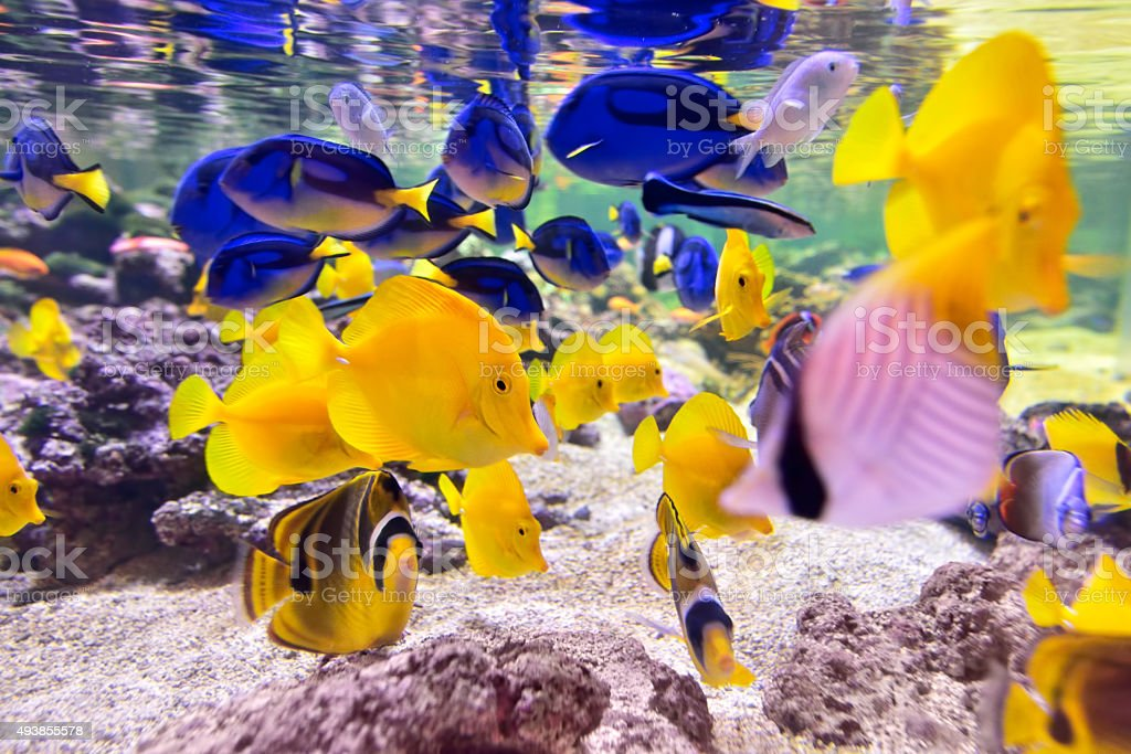 tropical fishes stock photo