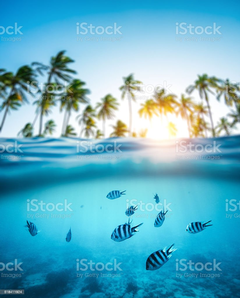 Tropical Fishes Underwater stock photo