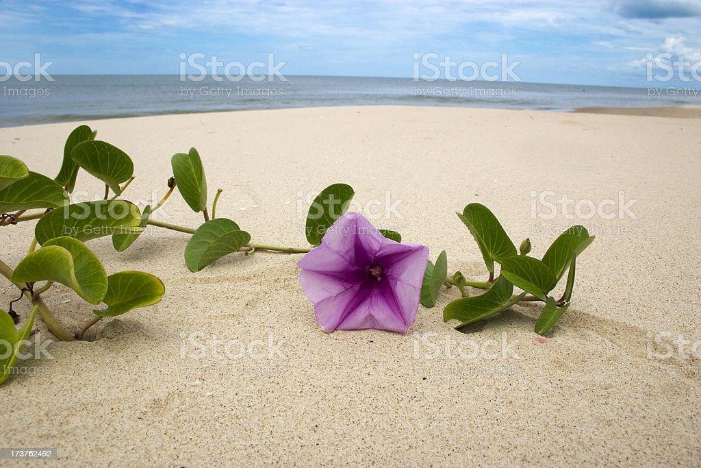 Tropical flower in beach stock photo