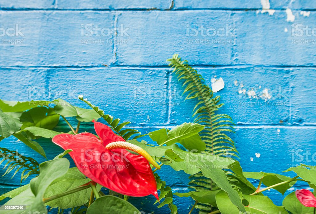 Tropical Flowers and Ferns in Hawaii with Blue Wall Background stock photo