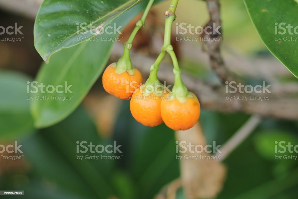 Tropical Flowers and plants stock photo
