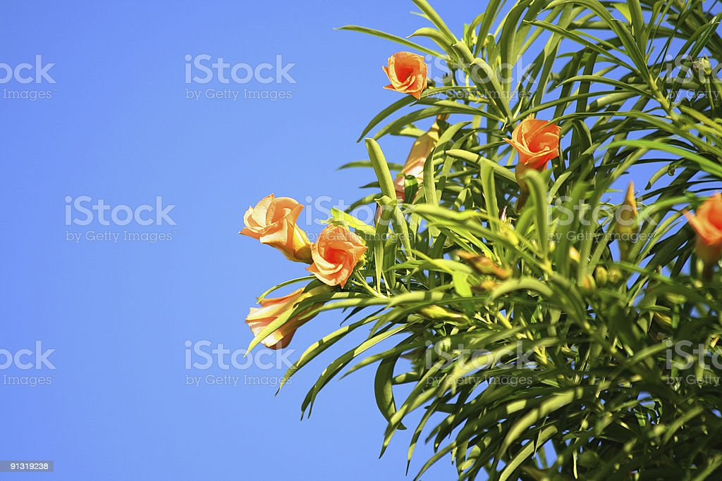 Tropical flowers on a background of the sky royalty-free stock photo