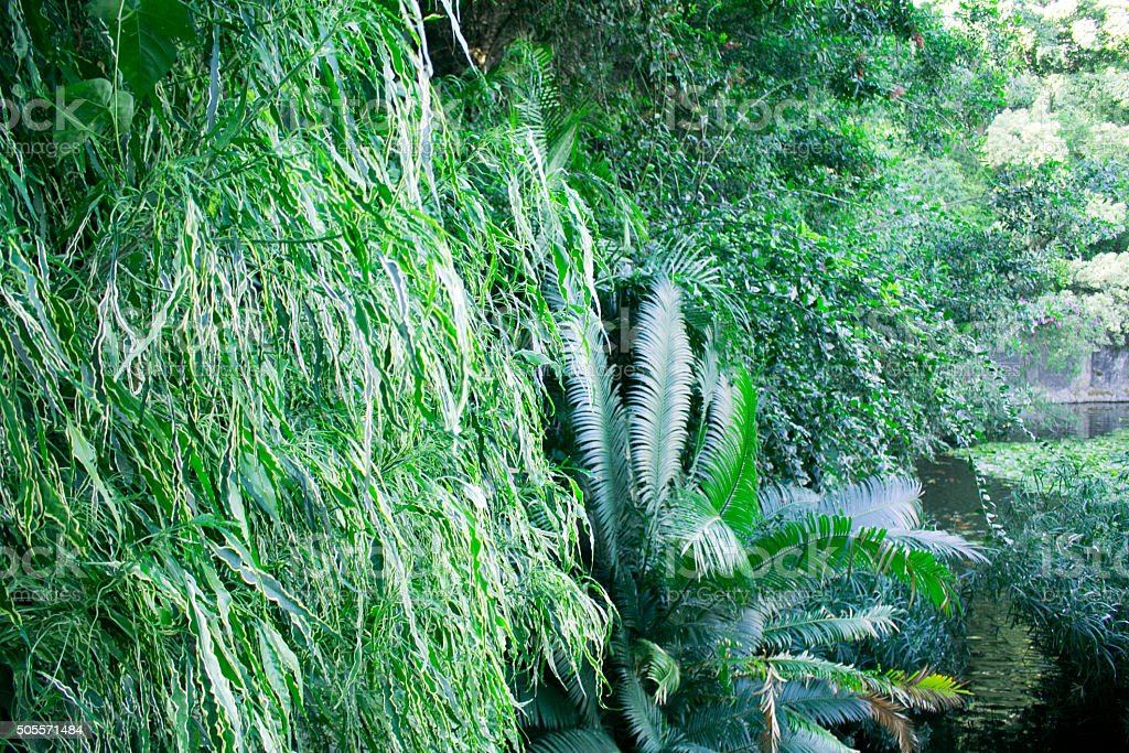 Tropical foliage background stock photo