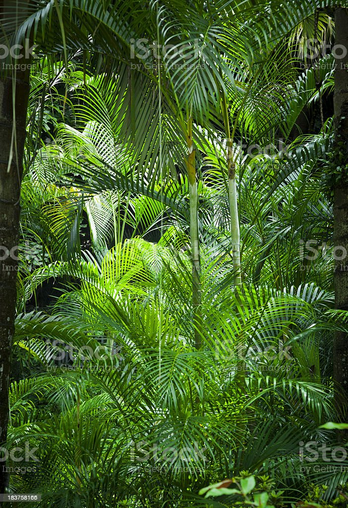 Tropical foliage stock photo