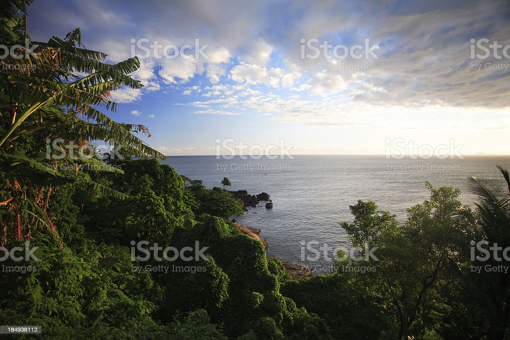 Tropical forest & Ocean (Brazil) royalty-free stock photo