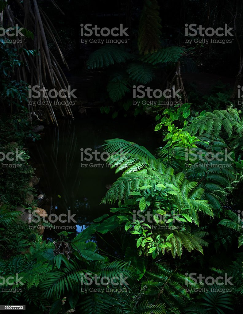 Tropical Forest and Pond stock photo