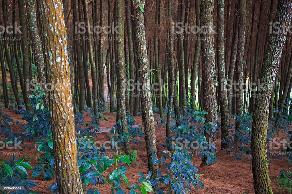 Tropical Forest Backgrounds located at Indonesia stock photo