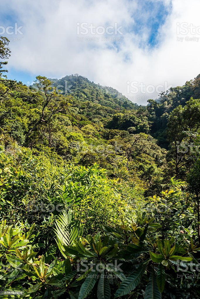 Tropical forest in Monteverde, Costa Rica stock photo