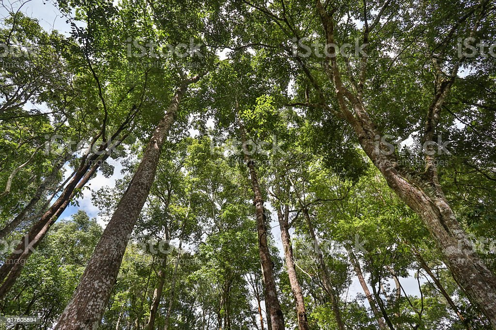 Tropical forest , northern Thailand stock photo